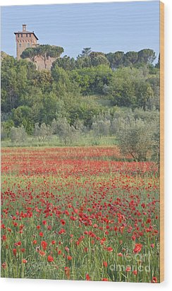 Poppy Field Wood Print by Rob Tilley