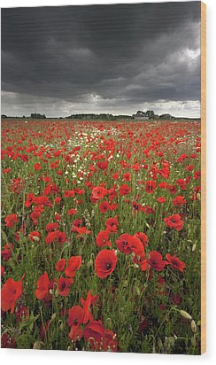 Poppy Field With Stormy Sky In Background Wood Print by Chris Conway
