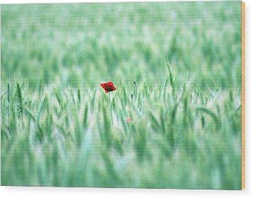 Poppy In Wheat Field Wood Print by By Julie Mcinnes