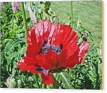Poppy Wood Print by Nick Kloepping