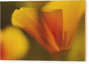 Poppy Wood Print by Ralph Vazquez