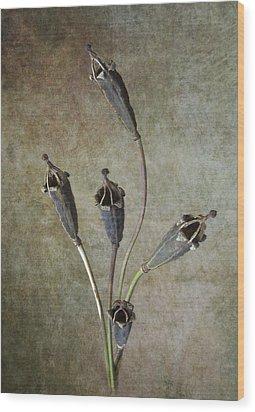 Poppy Seed Cases Wood Print by Debra Kelday