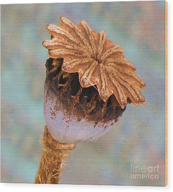 Wood Print featuring the photograph Poppy Seed Pod by Michele Penner
