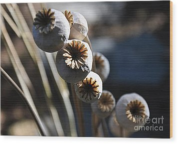 Poppy Seed Pods Wood Print by Tanya  Searcy