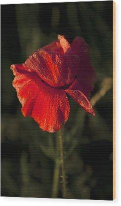 Poppy Wood Print by Svetlana Sewell