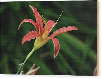 Wood Print featuring the photograph Popsicle Bloom by Lorraine Devon Wilke