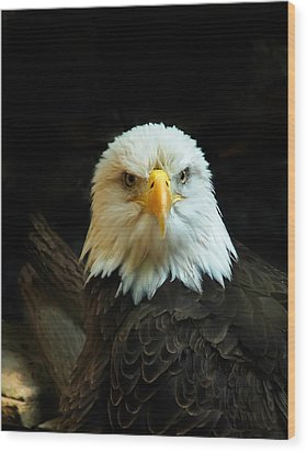 Wood Print featuring the photograph Portrait American Bald Eagle by Randall Branham