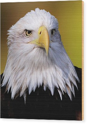 Portrait Of A Bald Eagle Wood Print