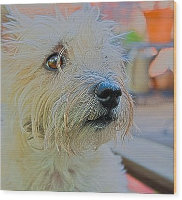 Portrait Of A Cairn Terrier Wood Print