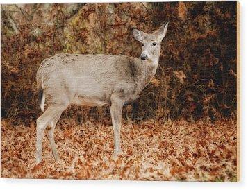 Portrait Of A Deer Wood Print by Kathy Jennings
