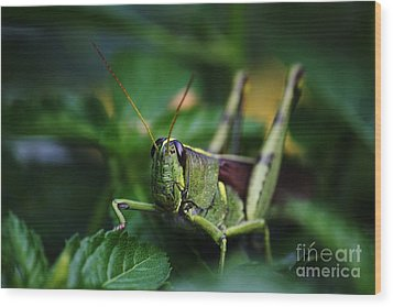 Portrait Of A Grasshopper Wood Print