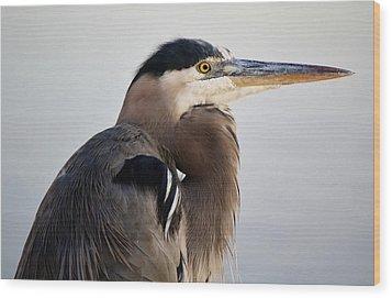 Portrait Of A Great Blue Heron Wood Print by Paulette Thomas