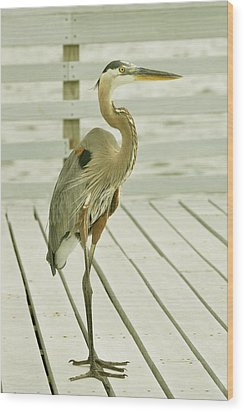 Portrait Of A Heron Wood Print by Rick Frost