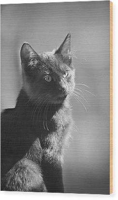 Portrait Of A Kitty Wood Print by Kim Henderson