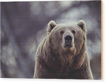 Portrait Of A Kodiak Brown Bear Wood Print by Joel Sartore