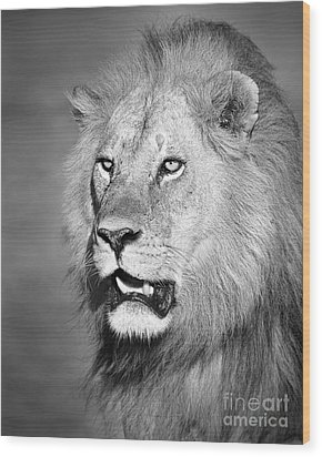 Portrait Of A Lion Wood Print by Richard Garvey-Williams