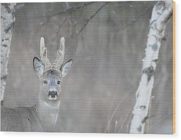 Portrait Of A Roe Buck Wood Print by Ulrich Kunst And Bettina Scheidulin