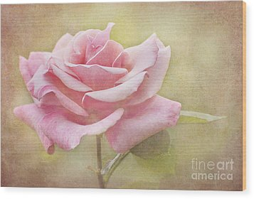Portrait Of A Rose Wood Print by Cheryl Davis