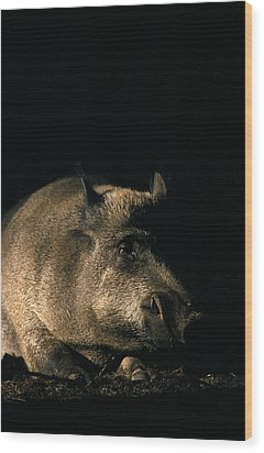 Portrait Of A Wild Boar Wood Print by Ulrich Kunst And Bettina Scheidulin