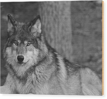 Portrait Of A Wolf Wood Print by Kate Purdy