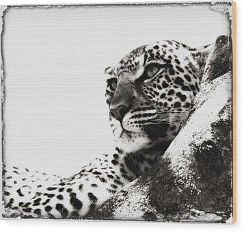 Portrait Of An African Leopard Wood Print by Carson Ganci