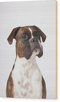 Portrait Of Boxer Dog On White Wood Print by LJM Photo