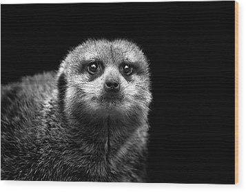 Portrait Of Meerkat Wood Print by Malcolm MacGregor