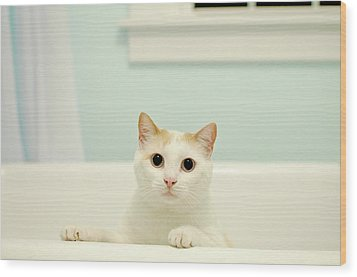 Portrait Of White Cat Wood Print by Melissa Ross