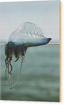 Portuguese Man-of-war Wood Print by Peter Scoones