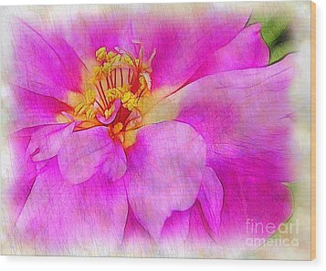 Portulaca With Texture Wood Print by Judi Bagwell