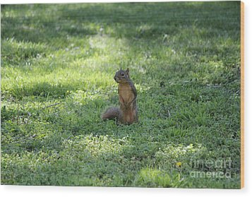 Posing Squirrel Wood Print