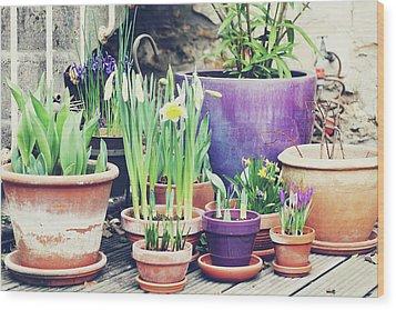 Pot Plants Wood Print by Lespetitsriens