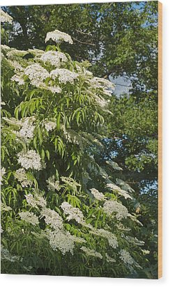 Wood Print featuring the photograph Potchen's Cascade by Joseph Yarbrough