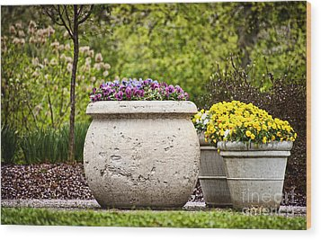 Wood Print featuring the photograph Pots Of Pansies by Cheryl Davis