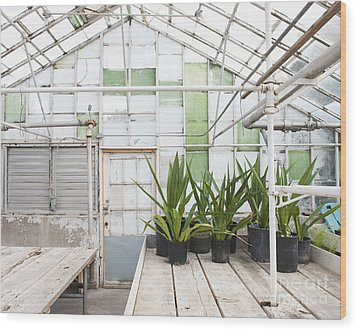 Potted Plants In A Greenhouse Wood Print by Thom Gourley/Flatbread Images, LLC