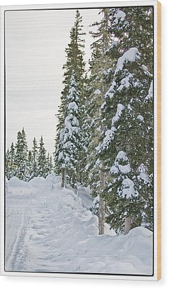Powdery Snow Path Wood Print