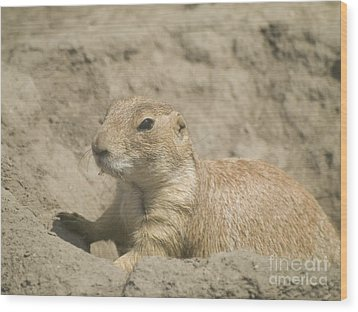 Prairie Dog Wood Print by Odon Czintos