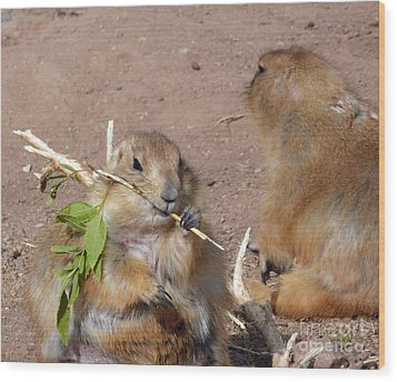 Prairie Dogs Wood Print by Methune Hively