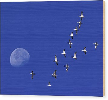 Prairie Migration Wood Print by Tony Beck