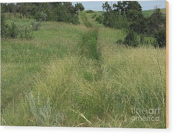 Prairie Trail In High Grass Wood Print by Jim Sauchyn