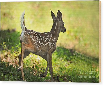 Wood Print featuring the photograph Prancing Fawn by Nava Thompson