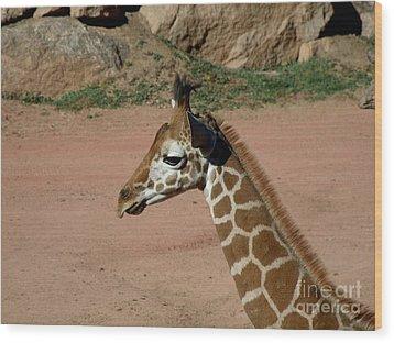 Precious Baby Giraffe Wood Print by Donna Parlow