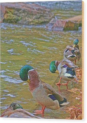 Wood Print featuring the photograph Preening Drakes In A Row by Gregory Scott