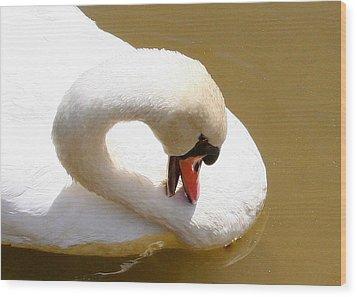Wood Print featuring the photograph Preening Swan Two by Paula Tohline Calhoun
