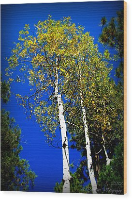 Prescott Fall Aspen Canopies Wood Print