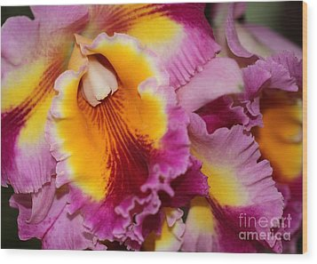 Pretty And Colorful Orchids Wood Print by Sabrina L Ryan