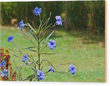 Pretty Blue Flowers Wood Print by David Alexander