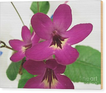 Wood Print featuring the photograph Pretty In Pink by Mark Robbins