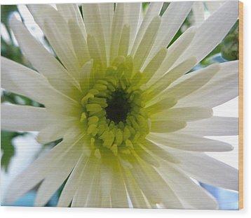 Pretty In White Wood Print by Karen Grist