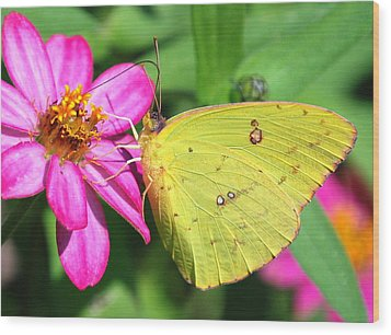 Pretty On Pink Wood Print by Kathy Gibbons